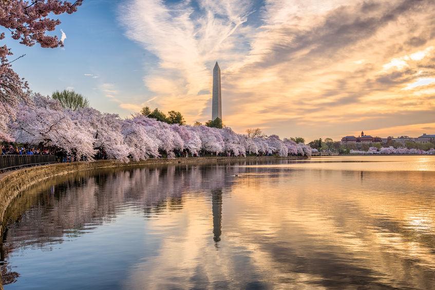 Washington DC, Washington Monument in spring season.